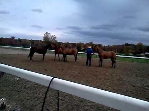 Guy McLean Saratoga Equine Exhibit and Expo 2011(3)