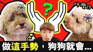 【🐶狗狗挑戰】主人只要做「花花手勢👐🏻」,狗狗就會……😱!?Muffin、Brownie的反應太搞笑了!(中字)Flower Challenge