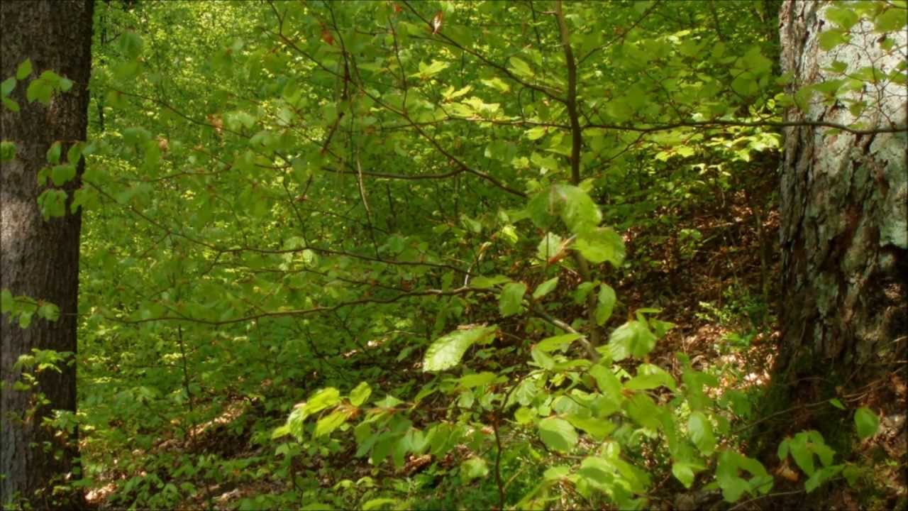 a walk in the forest Find a walk in the forest sex videos for free, here on pornmdcom our porn search engine delivers the hottest full-length scenes every time.