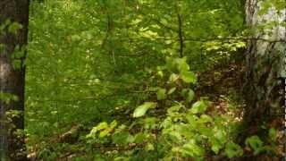 A Walk in the Forest - Relax Music and Nature Sounds
