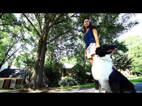 Oliver: Herding Dog: Aggression