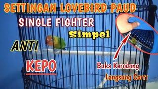Download lagu SETTINGAN LOVEBIRD PAUD SINGLE FIGHTER HARIAN DAN LOMBA