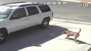 Собака напала на ребенка, оставив жестокую травму ноги