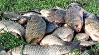 Обалденный клёв 17 карасей рыбалка на карася