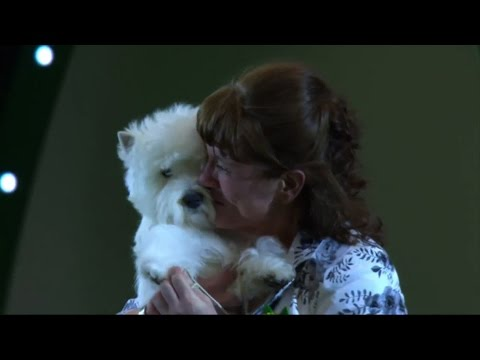 Around the Dog World - Crufts & Pawscars 2016 Teaser