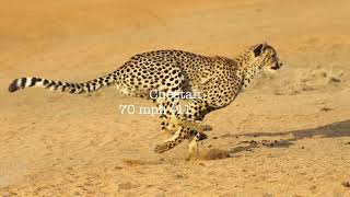 Top 10 Fastest Animals On Earth!!!