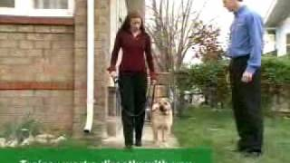 Stop Your Dog's Incessant Barking - Bark Buster's Approach