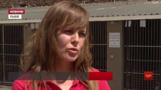 ЛКП «Лев» запрошує волонтерів вигулювати собак