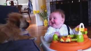 Kleine Hunde und kleine Kinder. Lustige Tiere. Funny animals.