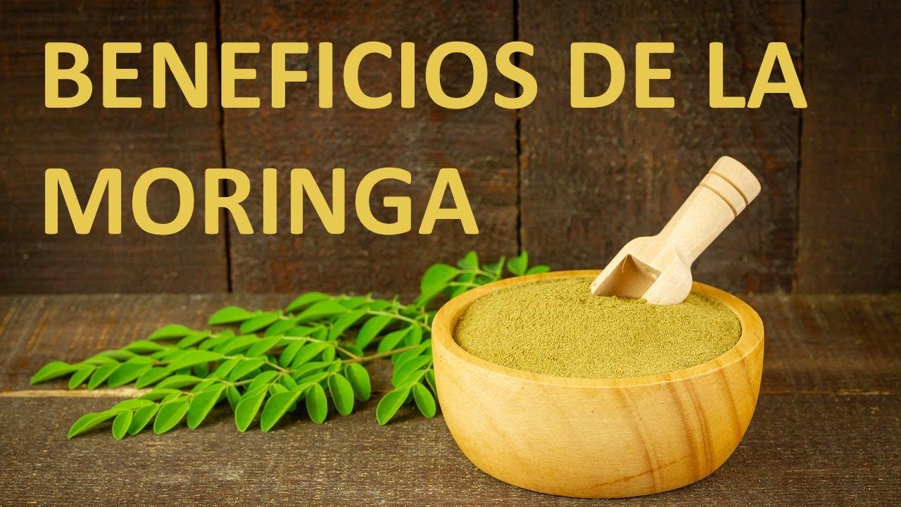 Beneficios de la planta moringa para la salud youtube for Planta decorativa con propiedades medicinales
