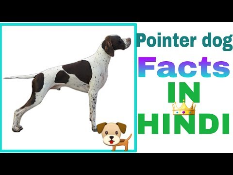 pointer dog facts in hindi