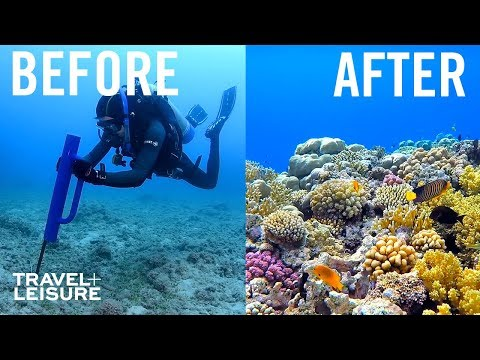 How Scientists Are Restoring The Great Barrier Reef | Travel + Leisure