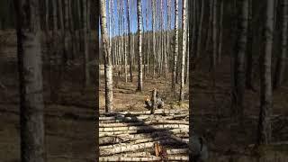 Ciemna strona pracy w lesie