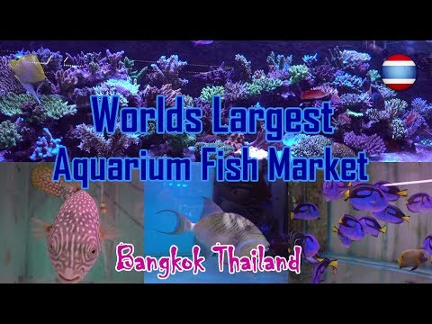 Aquarium Fish Market WORLD'S LARGEST Bangkok Part 2 Sea Life