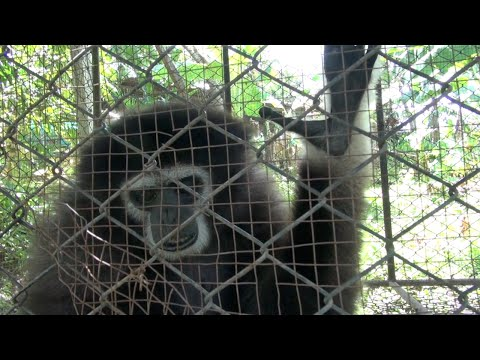 Monkey School Cruelty - Ep. 1, For the Wild in South East Asia