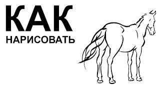 Рисунки лошади. KАК НАРИСОВАТЬ ЛОШАДЬ поэтапно(Как нарисовать лошадь поэтапно карандашом для начинающих за короткий промежуток времени. http://youtu.be/8hpY5PTeDLA..., 2015-06-22T09:03:46.000Z)