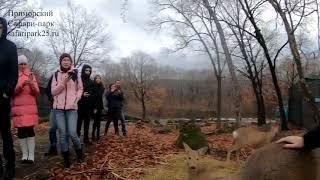 Ролик посетителей Сафари парка  Сафари парк Приморский край