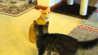 Cat fights a cat statue