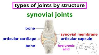 Joints: Structure and Types of Motion