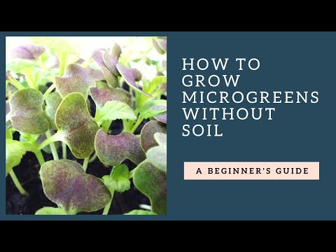 How To Grow Microgreens at Home Without Soil Martys Garden Style
