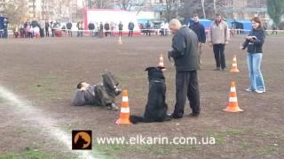 Немецкая овчарка Касим-Хан эль Карин (Kasim-Han el Karin)