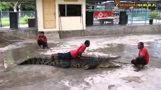 Zwierzęta Borneo - krokodyle, słonie, tygrysy, orangutany / Animals of Borneo