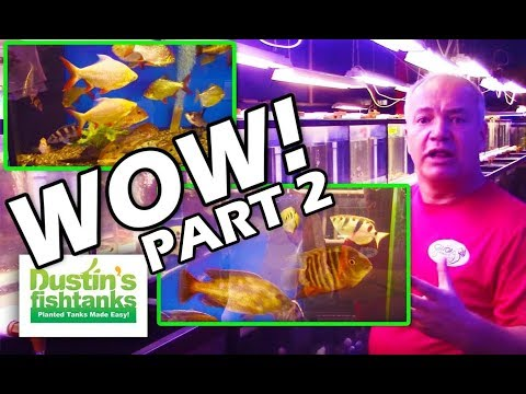 Best Aquarium Store In Ohio Part 2  Gerber's Tropical Fish