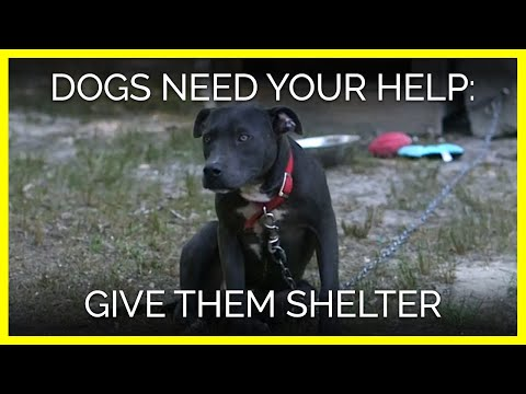Dogs Need Your Help! WATCH NOW