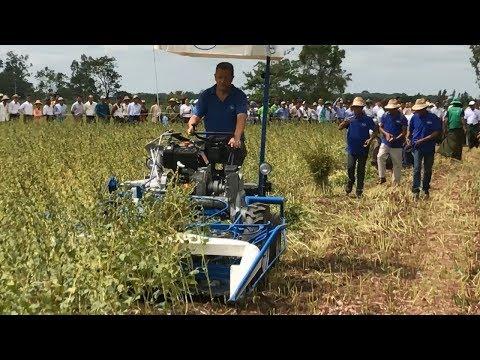 BCS Field test: reaper binder 280 - sesame crop