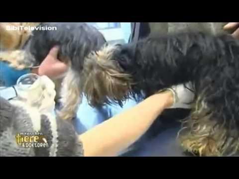 Mädchen von großen Hund gefickt