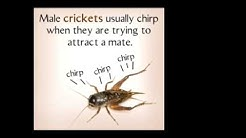 Why Do Crickets Chirp These Reasons Will Simply Amaze You!