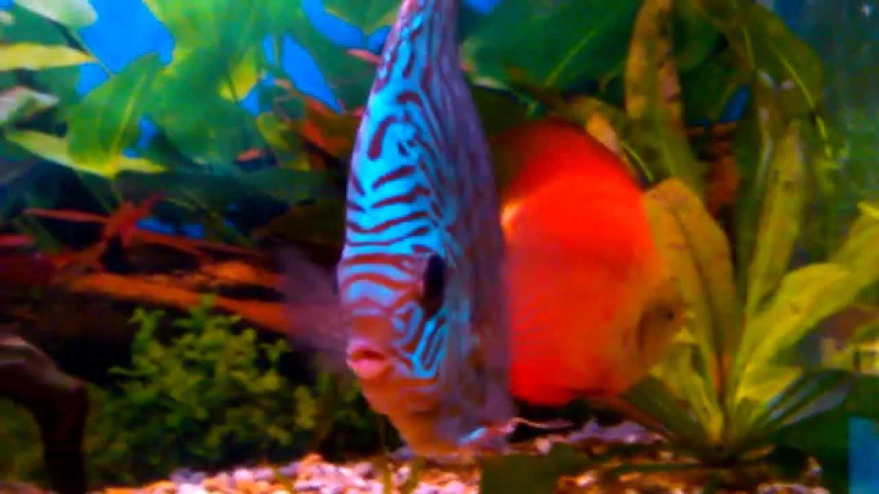 Large Colourful Fish at Skegness Natureland Seal Sanctuary - YouTube