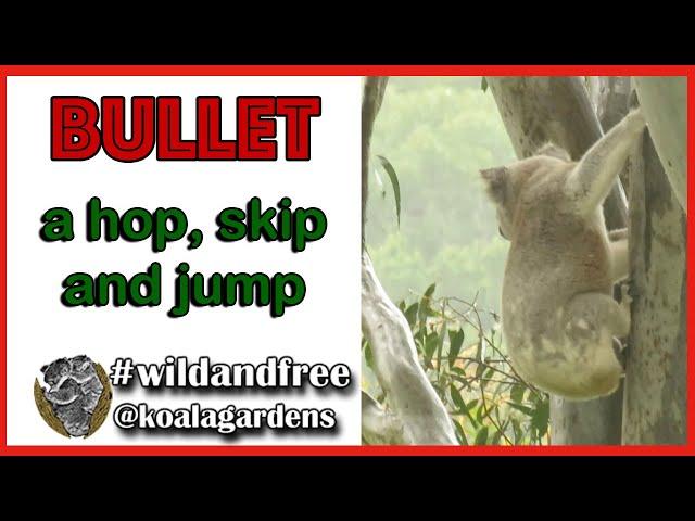 Bullet - a hop, skip and a jump