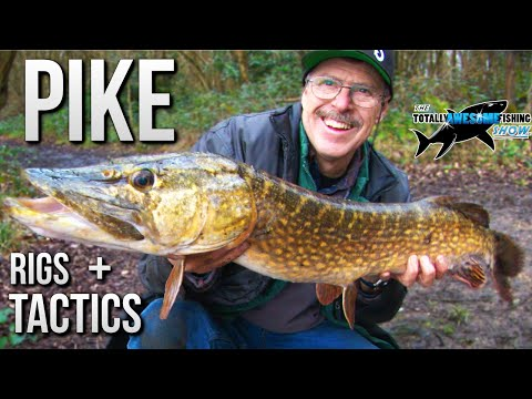 Pike Fishing - Rigs & Tactics for Hi-Stack Fishing | TAFishing