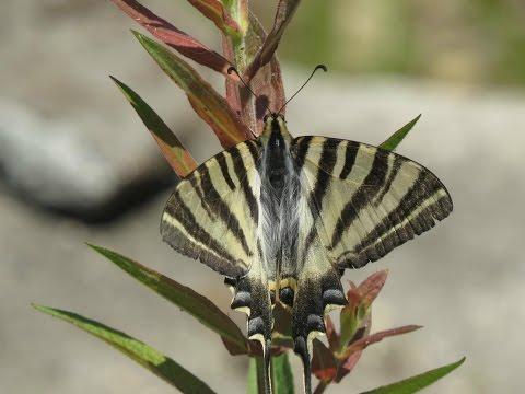 El susurro de una mariposa