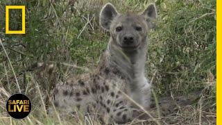 Safari Live - Day 257 | National Geographic