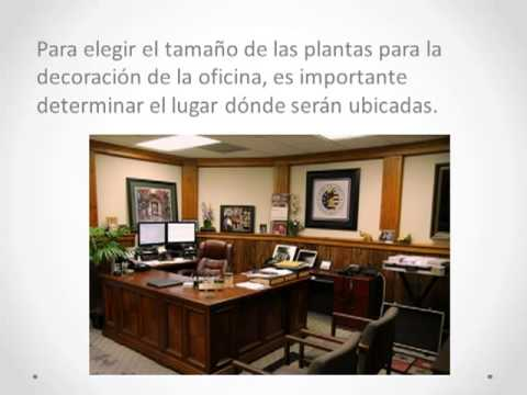 Ideas para decorar una oficina con plantas youtube for Plantas decorativas para oficina