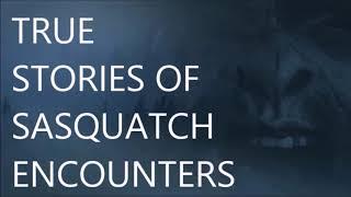 3 TRUE BIGFOOT ENCOUNTER STORIES