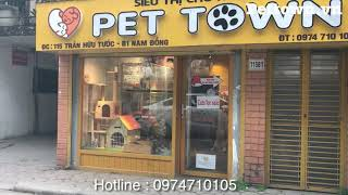 Bạn muốn mua mèo cảnh hãy đến với Pet Town