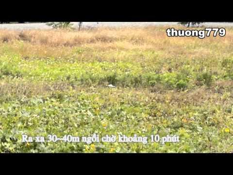 Bẫy chim cút (quail trap)