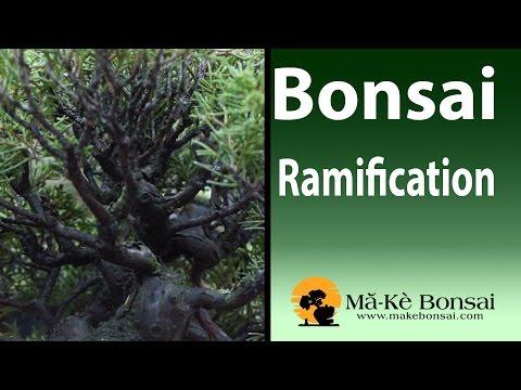 97) Bonsai Ramification of Branches