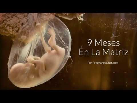 9 Meses En La Matriz Una Mirada Más Notable Al Desarrollo Del Feto Youtube