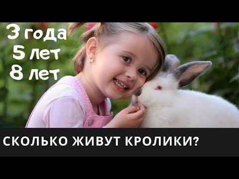 Сколько живут вислоухие кролики в домашних условиях