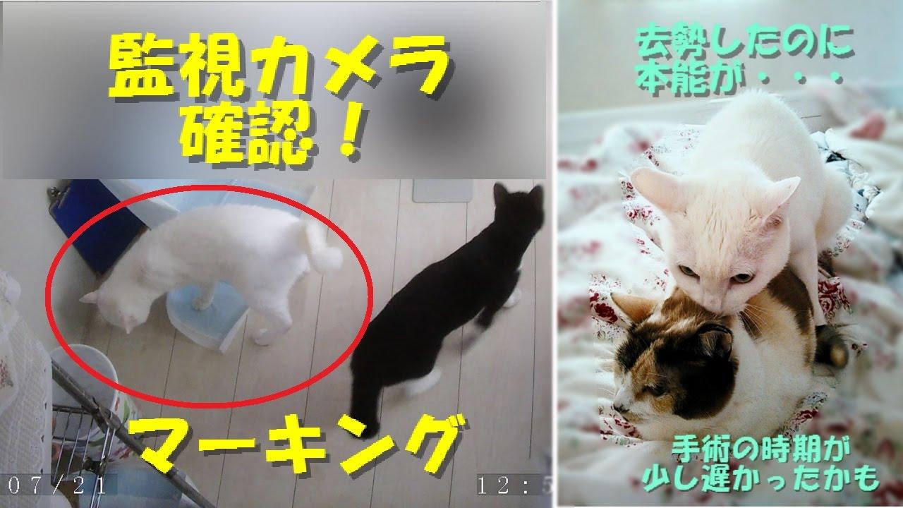 マーキング 防止 猫