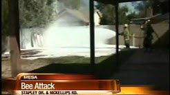 Bees attack 4 In Mesa