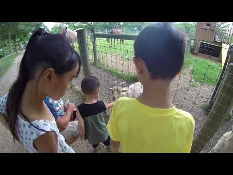 Farm Day at Linvilla Orchards in Media, PA