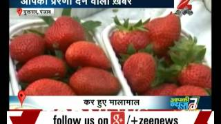 Three farmers start strawberry cultivation in Punjab
