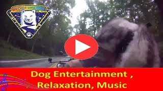 Live Now | Dog Entertainment | Dog Relaxation | Dog Music | Husky Dog Zarro Rides The Motorcycle