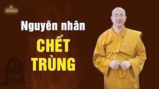 Nguyên nhân chết trùng và cách hóa giải trùng tang (Rất hay) | Thầy Thích Trúc Thái Minh