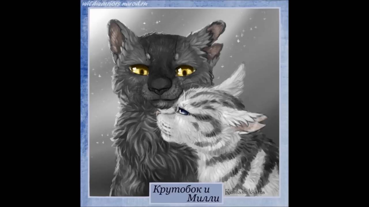 Warrior Cats Bilder